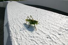 Free Grasshopper Royalty Free Stock Photography - 788557