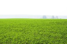 Free Field Stock Photography - 788832