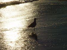 Free Bird Stock Images - 789014