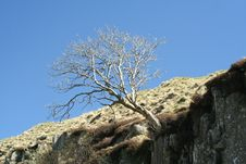 Free Cliff Tree Stock Photos - 789323