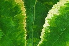 Free Leaf Background Stock Photos - 789433