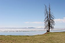 Tree By Yellowstone Lake Royalty Free Stock Photos