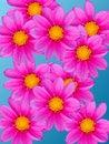 Free Flowers Decorative Royalty Free Stock Image - 7801926