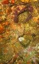 Free Honeycomb Moray Eel Stock Photography - 7807552