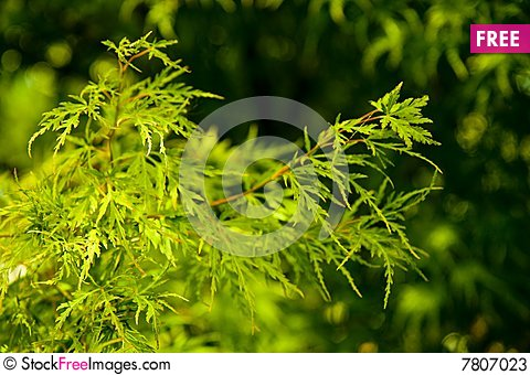 Free Green Leaves On Green Stock Photos - 7807023