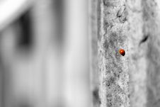 Free Small Ladybird Stock Photos - 7800263