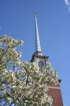 Free Church Steeple Framed By Dogwood Royalty Free Stock Images - 7800569