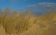 Free Sand Dune On Beach Stock Photo - 7801010