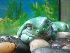 Free Blue Frog In Aquarium Royalty Free Stock Image - 7801156