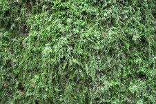 Free Moss Stock Image - 7801821
