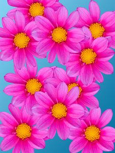 Free Flowers Decorative Royalty Free Stock Image - 7801926