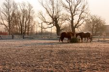 Free Group Of Horses Stock Photos - 7802093