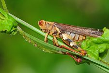 Free Dead Grasshopper In The Park Royalty Free Stock Image - 7802176