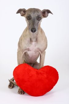 Free Dog With Heart Royalty Free Stock Photography - 7803847
