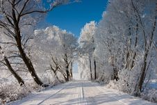 Free The Trees In Winter Royalty Free Stock Photos - 7805018