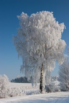 Free In Winter Royalty Free Stock Images - 7805109