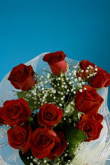 Free Red Buds Of Roses Stock Photos - 7805703