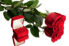 Free Red Rose And Wedding Rings Stock Photos - 7806883