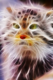 Free Cat Closeup Rendered With Light Streaks Stock Photography - 7807642