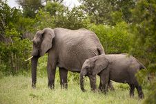 Elephant With Baby Elephant Royalty Free Stock Images