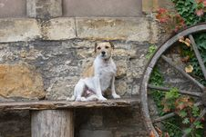 Free Dog Sits On A Bench Stock Photo - 7809960