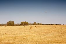 Free Mowed Field Royalty Free Stock Photography - 7811237