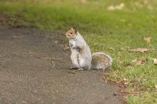 Free Male Squirrel Standing/Begging Stock Photo - 7811370