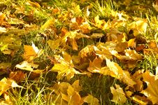 Free Autumn Fallen Leaves Background Stock Photo - 7812920