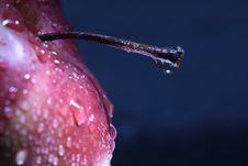 Red Apple On Dark Royalty Free Stock Photos