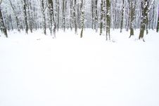 Free Winter Forest Royalty Free Stock Photos - 7814218
