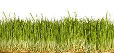 Free A Close Up Shot Of Grass With Dew Royalty Free Stock Images - 7815139