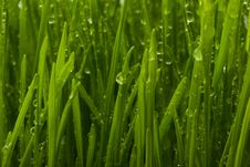 Free A Close Up Shot Of Grass With Dew Stock Images - 7815174