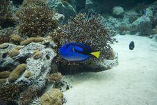 Free Blue Fish Stock Photography - 7816672