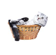Free The Kitten  Lies In A Basket. Stock Image - 7817031