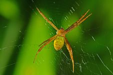 Free Yellow Spider And Web Royalty Free Stock Images - 7817259