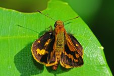 Free Small Moth In The Park Stock Photo - 7817270