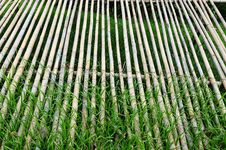 Free Dried Bamboo In The Park Stock Photos - 7817273