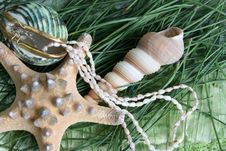 Free Seashells And Jewelery Stock Photo - 7818960