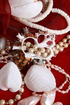 Free Seashells And Jewelery Stock Photo - 7819030