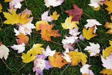 Free Leaves On Ground Stock Photography - 7819262