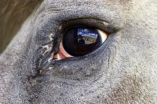 Horse Eye Reflection. Royalty Free Stock Image