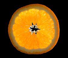 Free Orange Royalty Free Stock Photography - 7819607
