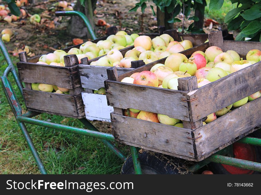 Apples in Steinsel. Luxembourg