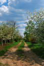 Free Rural Road With Flowers Trees Royalty Free Stock Photography - 7821197