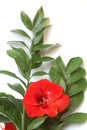 Free Bouquet With Bright Red Lily And Big Green Leaves Royalty Free Stock Photos - 7827738