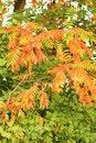 Free Autumn Leaves Stock Photo - 7827760
