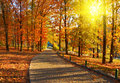 Free Autumn In The Park Stock Image - 7828901