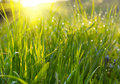 Free Green Grass Meadow Royalty Free Stock Photos - 7829168