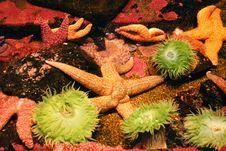 Free Starfish Stock Photo - 7820170