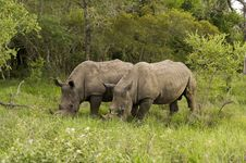 Free Rhino In Kruger Park Royalty Free Stock Image - 7820276